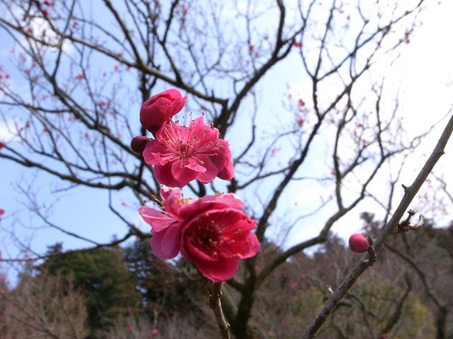 2012-03-03_0012.jpg