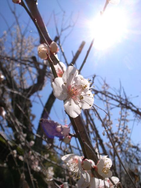 2012-03-25_0032.jpg